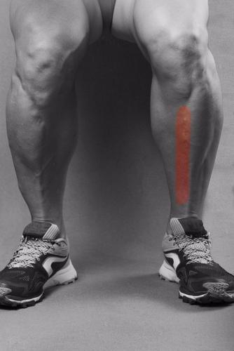 posterior tendon